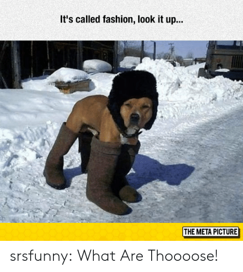 Fashion, Tumblr, and Blog: It's called fashion, look it up..  THE META PICTURE srsfunny:  What Are Thoooose!