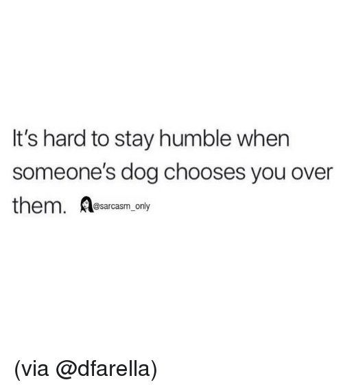 Funny, Memes, and Humble: It's hard to stay humble when  someone's dog chooses you over  them. Aesarcasm.ondy (via @dfarella)