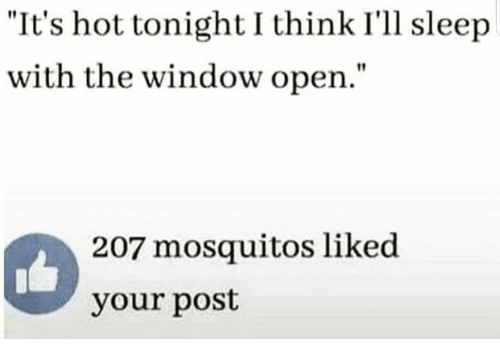 "mosquitos: ""It's hot tonight I think I'll sleep  with the window open.""  207 mosquitos liked  your post"