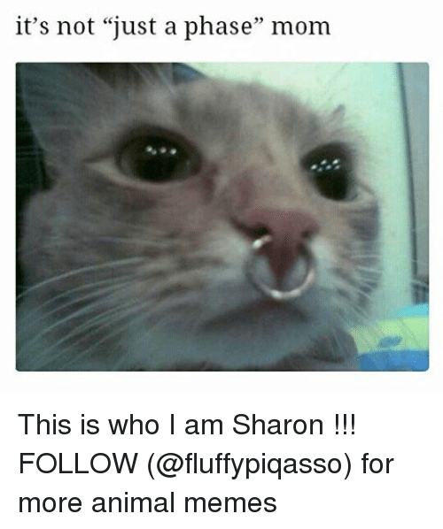 "Memes, 🤖, and Phase: it's not ""just a phase"" mom This is who I am Sharon !!! FOLLOW (@fluffypiqasso) for more animal memes"