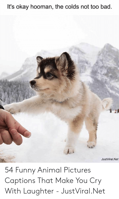 Hooman: It's okay hooman, the colds not too bad.  JustViral.Net 54 Funny Animal Pictures Captions That Make You Cry With Laughter - JustViral.Net