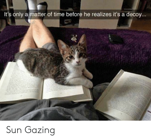 Memes, Time, and A Matter: It's only a matter of time before he realizes it's a decoy... Sun Gazing