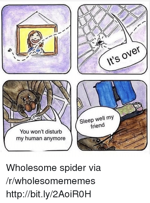 My Human: It's over  You won't disturb  my human anymore  Sleep well my  friend Wholesome spider via /r/wholesomememes http://bit.ly/2AoiR0H