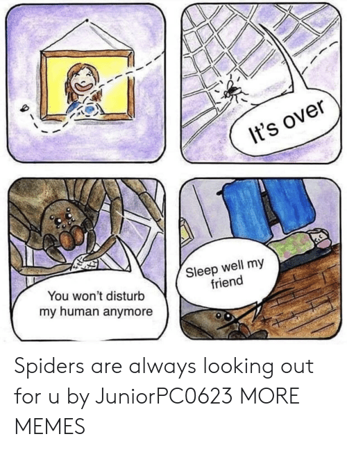 Dank, Memes, and Target: It's over  You won't disturb  my human anymore  Sleep well my  friend Spiders are always looking out for u by JuniorPC0623 MORE MEMES