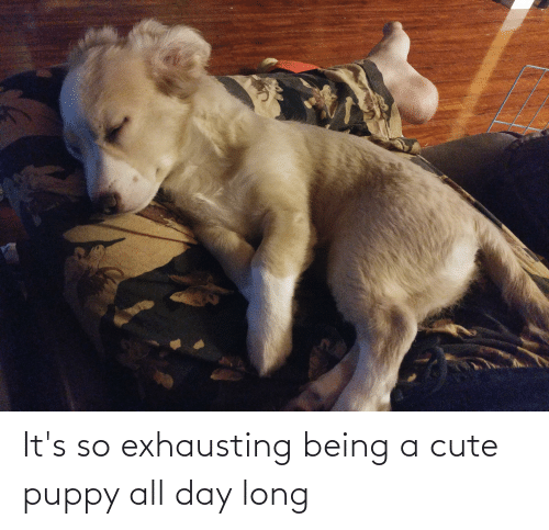All Day Long: It's so exhausting being a cute puppy all day long