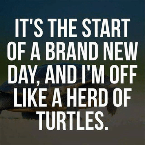 Im Off: IT'S THE START  OF A BRAND NEW  DAY, AND I'M OFF  LIKE A HERD OF  TURTLES