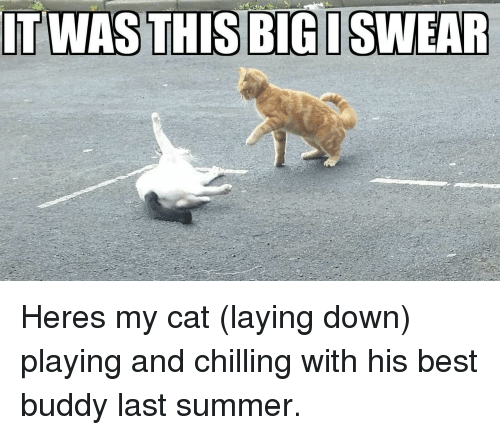 Summer, Best, and Cat: ITWASTHIS BIG ISWEAR Heres my cat (laying down) playing and chilling with his best buddy last summer.