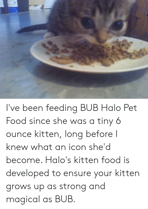 Food, Halo, and Memes: I've been feeding BUB Halo Pet Food since she was a tiny 6 ounce kitten, long before I knew what an icon she'd become. Halo's kitten food is developed to ensure your kitten grows up as strong and magical as BUB.