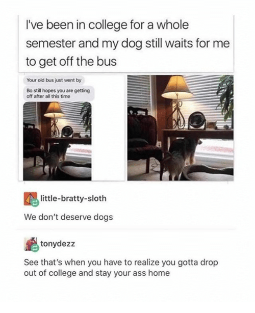 Ass, College, and Dank: I've been in college for a whole  semester and my dog still waits for me  to get off the bus  Your old bus just went by  Bo still hopes you are getting  off after all this time  little-bratty-sloth  We don't deserve dogs  tonydezz  See that's when you have to realize you gotta drop  out of college and stay your ass home