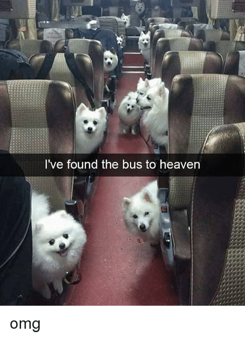 Heaven, Memes, and Omg: I've found the bus to heaven omg
