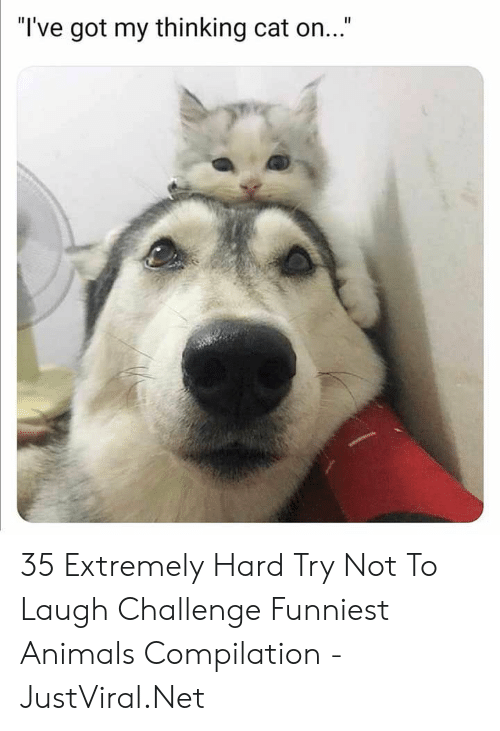 "challenge: ""I've got my thinking cat on..."" 35 Extremely Hard Try Not To Laugh Challenge Funniest Animals Compilation - JustViral.Net"