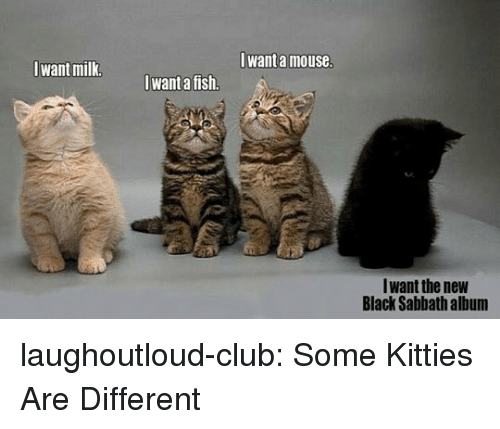 sabbath: Iwant a mouse  Iwant milk  want a fish.  Iwant the new  Black Sabbath album laughoutloud-club:  Some Kitties Are Different