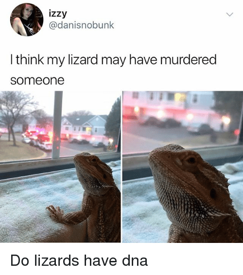 Memes, 🤖, and Dna: izzy  @danisnobunk  l think my lizard may have murdered  someone Do lizards have dna