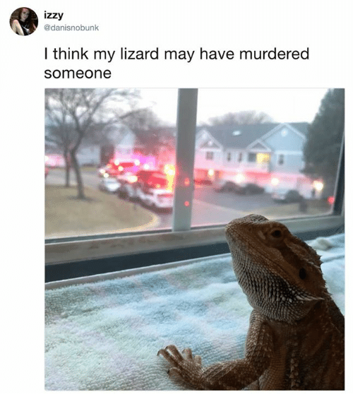 Dank, 🤖, and May: izzy  @danisnobunk  l think my lizard may have murdered  someone