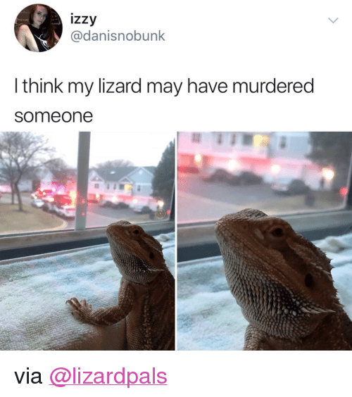 "Instagram, Target, and Blank: izzy  @danisnobunk  l think my lizard may have murdered  someone <p>via <a href=""https://www.instagram.com/lizardpals/"" target=""_blank"">@lizardpals</a></p>"