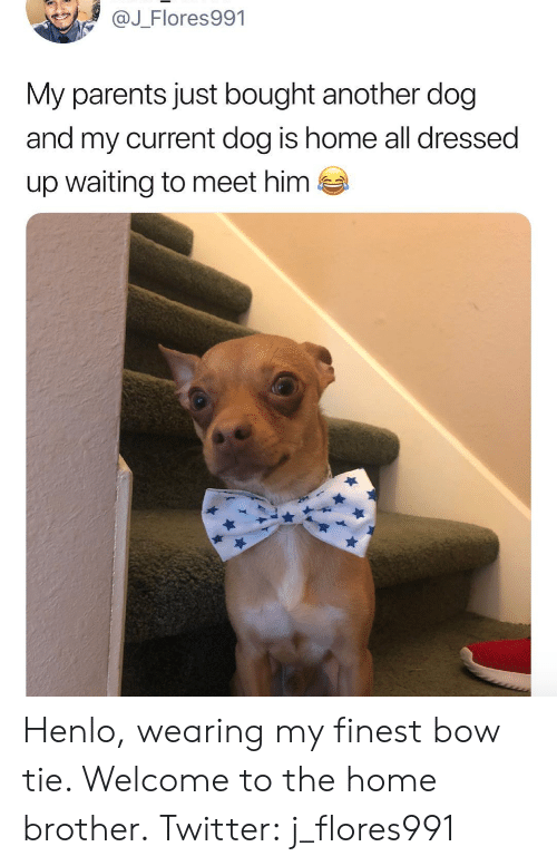 Parents, Twitter, and Home: @J_Flores991  My parents just bought another dog  and my current dog is home all dressed  up waiting to meet him  es Henlo, wearing my finest bow tie. Welcome to the home brother. Twitter: j_flores991