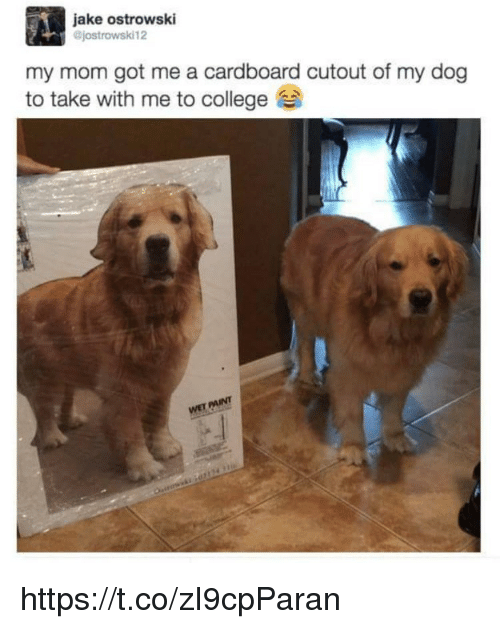 College, Memes, and Paint: jake ostrowski  @jostrowski12  my mom got me a cardboard cutout of my dog  to take with me to college  PAINT  WET https://t.co/zI9cpParan