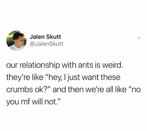 """Weird, Ants, and Will: Jalen Skutt  @JalenSkutt  our relationship with ants is weird.  they're like """"hey, I just want these  crumbs ok?"""" and then we're all like """"no  you mf will not."""""""