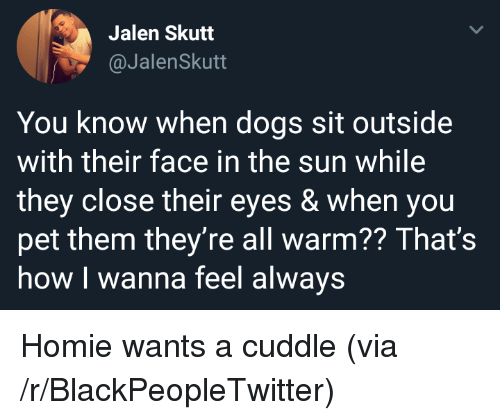 Blackpeopletwitter, Dogs, and Homie: Jalen Skutt  @JalenSkutt  You know when dogs sit outside  with their face in the sun while  they close their eyes & when you  pet them they're all warm?? That's  how I wanna feel always Homie wants a cuddle (via /r/BlackPeopleTwitter)