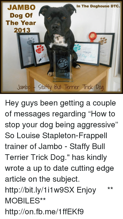 """doghouse: JAMBO  In The Doghouse DTC  Dog of  The Year  2013  DOG OF 2013  Jambo Sta  Bull Terrier Trick Dog Hey guys been getting a couple of messages regarding """"How to stop your dog being aggressive"""" So Louise Stapleton-Frappell trainer of Jambo - Staffy Bull Terrier Trick Dog."""" has kindly wrote a up to date cutting edge article on the subject. http://bit.ly/1i1w9SX  Enjoy 【ツ】  ** MOBILES** http://on.fb.me/1ffEKf9"""
