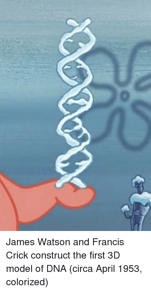April, Dna, and James: James Watson and Francis Crick construct the first 3D model of DNA (circa April 1953, colorized)