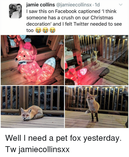 Christmas, Crush, and Facebook: jamie collins @jamieecollinsx.1d  I saw this on Facebook captioned 'l think  someone has a crush on our Christmas  decoration' and I felt Twitter needed to see Well I need a pet fox yesterday. Tw jamiecollinsxx