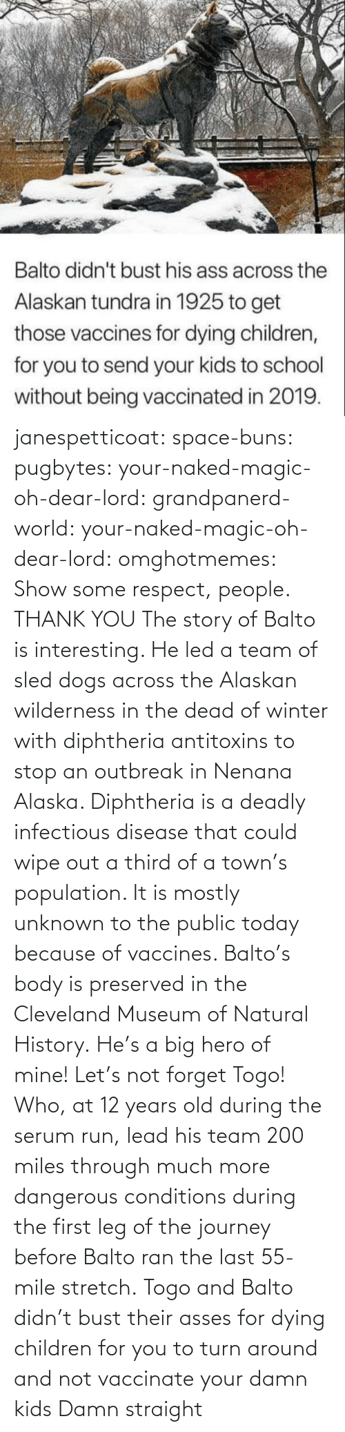 respect: janespetticoat: space-buns:  pugbytes:   your-naked-magic-oh-dear-lord:  grandpanerd-world:   your-naked-magic-oh-dear-lord:  omghotmemes: Show some respect, people.  THANK YOU   The story of Balto is interesting. He led a team of sled dogs across the Alaskan wilderness in the dead of winter with diphtheria antitoxins to stop an outbreak in Nenana Alaska. Diphtheria is a deadly infectious disease that could wipe out a third of a town's population. It is mostly unknown to the public today because of vaccines. Balto's body is preserved in the Cleveland Museum of Natural History.   He's a big hero of mine!   Let's not forget Togo! Who, at 12 years old during the serum run, lead his team 200 miles through much more dangerous conditions during the first leg of the journey before Balto ran the last 55-mile stretch.   Togo and Balto didn't bust their asses for dying children for you to turn around and not vaccinate your damn kids    Damn straight