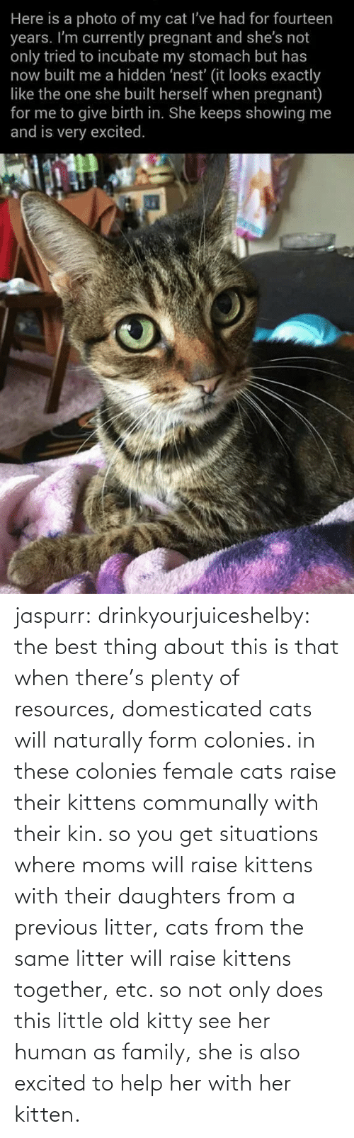 img: jaspurr:  drinkyourjuiceshelby:    the best thing about this is that when there's plenty of resources, domesticated cats will naturally form colonies. in these colonies female cats raise their kittens communally with their kin. so you get situations where moms will raise kittens with their daughters from a previous litter, cats from the same litter will raise kittens together, etc. so not only does this little old kitty see her human as family, she is also excited to help her with her kitten.