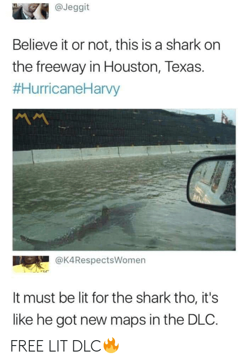 Lit, Shark, and Free: @Jeggit  Believe it or not, this is a shark on  the freeway in Houston, Texas.  #HurricaneHarvy  @K4RespectsWomen  It must be lit for the shark tho, it's  like he got new maps in the DLC. FREE LIT DLC🔥