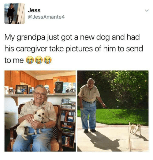 Memes, Grandpa, and 🤖: Jess  @Jess Amante  My grandpa just got a new dog and had  his caregiver take pictures of him to send  to me