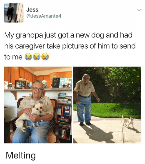 Funny, Grandpa, and Jesse: Jess  Jess Amante4  My grandpa just got a new dog and had  his caregiver take pictures of him to send  to me Melting