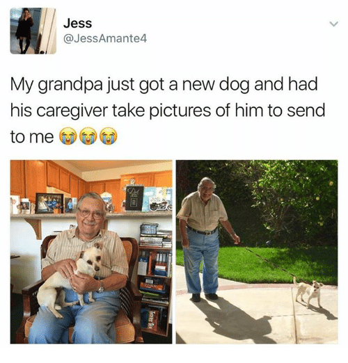 Memes, Grandpa, and 🤖: Jess  @Jess Amante4  My grandpa just got a new dog and had  his caregiver take pictures of him to send  to me
