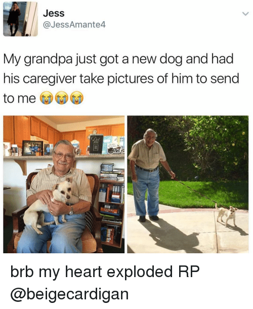Memes, Grandpa, and 🤖: Jess  Jess Amante4  My grandpa just got a new dog and had  his caregiver take pictures of him to send  to me brb my heart exploded RP @beigecardigan