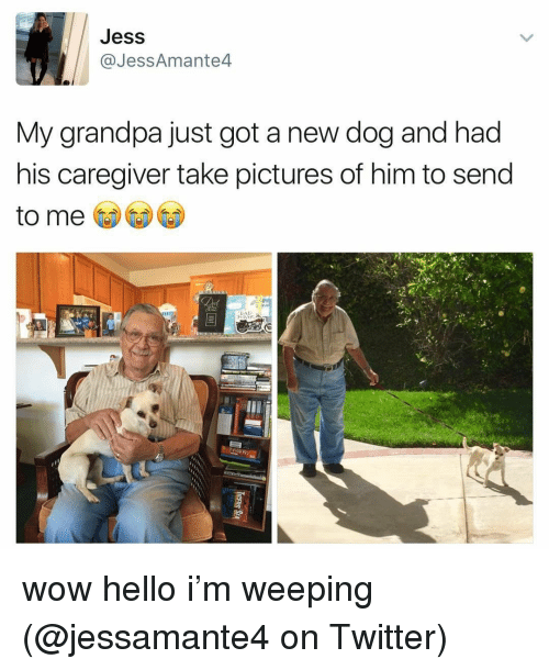 Hello, Memes, and Twitter: Jess  @JessAmante4  My grandpa just got a new dog and had  his caregiver take pictures of him to send  to me wow hello i'm weeping (@jessamante4 on Twitter)