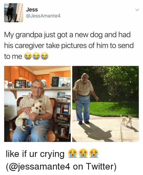 Caregiver: Jess  @JessAmante4  My grandpa just got a new dog and had  his caregiver take pictures of him to send  to me like if ur crying 😭😭😭 (@jessamante4 on Twitter)