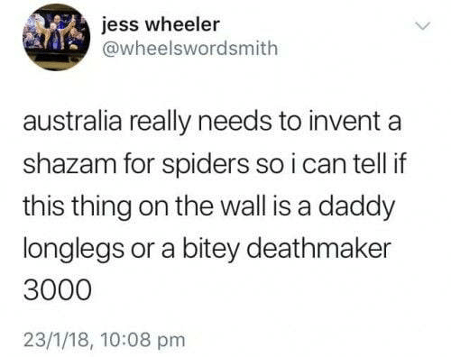 Wheeler: jess wheeler  @wheelswordsmith  australia really needs to invent  shazam for spiders so i can tell if  this thing on the wall is a daddy  longlegs or a bitey deathmaker  3000  23/1/18, 10:08 pm
