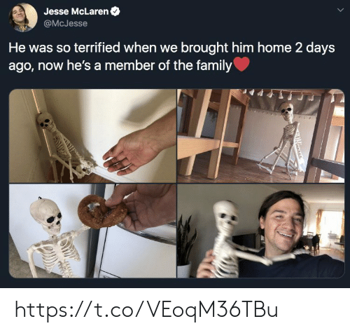 Family, Memes, and Home: Jesse McLaren  @McJesse  He was so terrified when we brought him home 2 days  ago, now he's a member of the family https://t.co/VEoqM36TBu