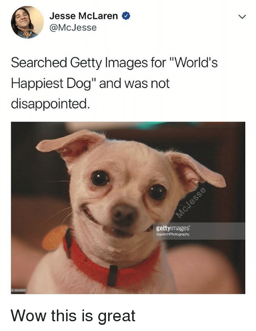 "Disappointed, Wow, and Getty Images: Jesse McLaren  @McJesse  Searched Getty Images for ""World's  Happiest Dog"" and was not  disappointed  gettyimages Wow this is great"