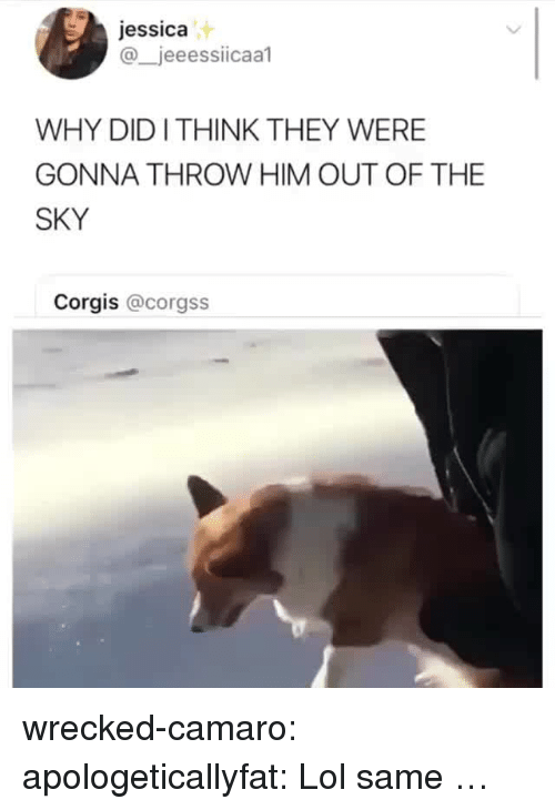 Lol, Target, and Tumblr: jessica  @_jeeessiicaal  WHY DIDI THINK THEY WERE  GONNA THROW HIM OUT OF THE  SKY  Corgis @corgss wrecked-camaro:  apologeticallyfat: Lol same …