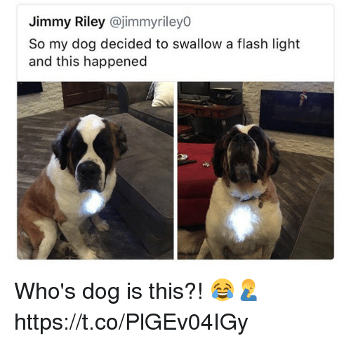 Flash, Dog, and Light: Jimmy Riley @jimmyriley0  So my dog decided to swallow a flash light  and this happened Who's dog is this?! 😂🤦‍♂️ https://t.co/PlGEv04IGy