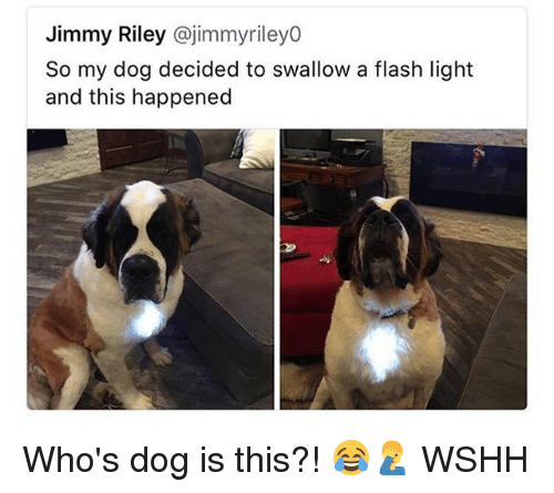 Memes, Wshh, and 🤖: Jimmy Riley @jimmyrileyo  So my dog decided to swallow a flash light  and this happened Who's dog is this?! 😂🤦‍♂️ WSHH
