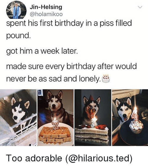 Birthday, Funny, and Ted: Jin-Helsing  @holamikoo  spent his first birthday in a piss filled  pound.  got him a week later.  made sure every birthday after would  never be as sad and lonely. Too adorable (@hilarious.ted)