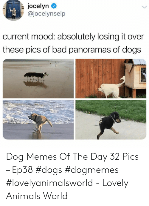 Animals, Bad, and Dogs: jocelyn  @jocelynseip  current mood: absolutely losing it over  these pics of bad panoramas of dogs Dog Memes Of The Day 32 Pics – Ep38 #dogs #dogmemes #lovelyanimalsworld - Lovely Animals World