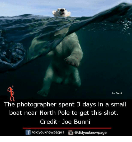 Bunni: Joe Bunni  The photographer spent 3 days in a small  boat near North Pole to get this shot.  Credit- Joe Bunni  f /didyouknowpagel  Cu  @didyouknowpage