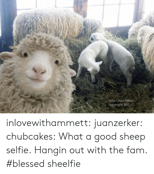 selfie: John Churchman  Copyright 2015 inlovewithammett:  juanzerker:   chubcakes: What a good sheep selfie.  Hangin out with the fam. #blessed   sheelfie