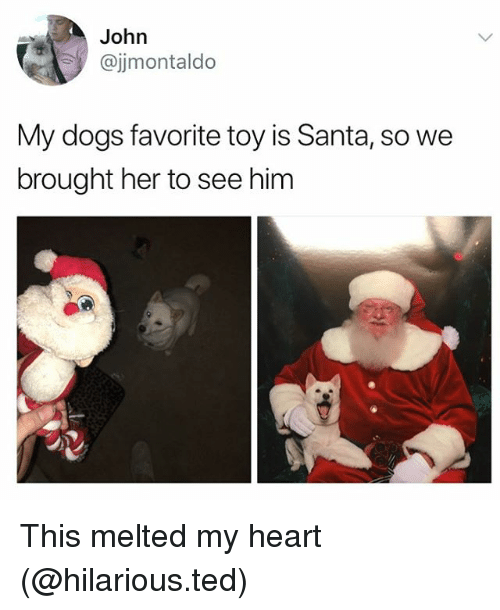 Dogs, Funny, and Ted: John  @jjmontaldo  My dogs favorite toy is Santa, so we  brought her to see him This melted my heart (@hilarious.ted)