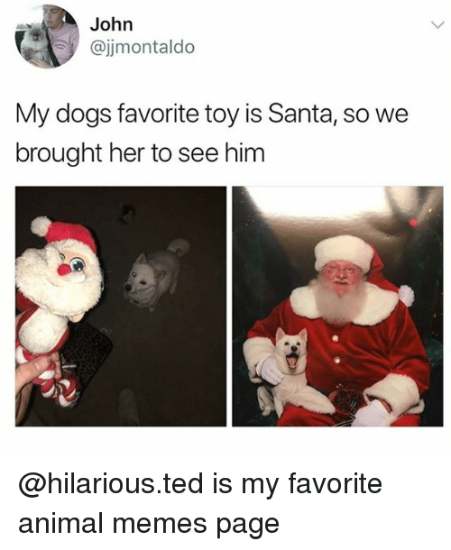Dogs, Memes, and Ted: John  @jjmontaldo  My dogs favorite toy is Santa, so we  brought her to see him @hilarious.ted is my favorite animal memes page