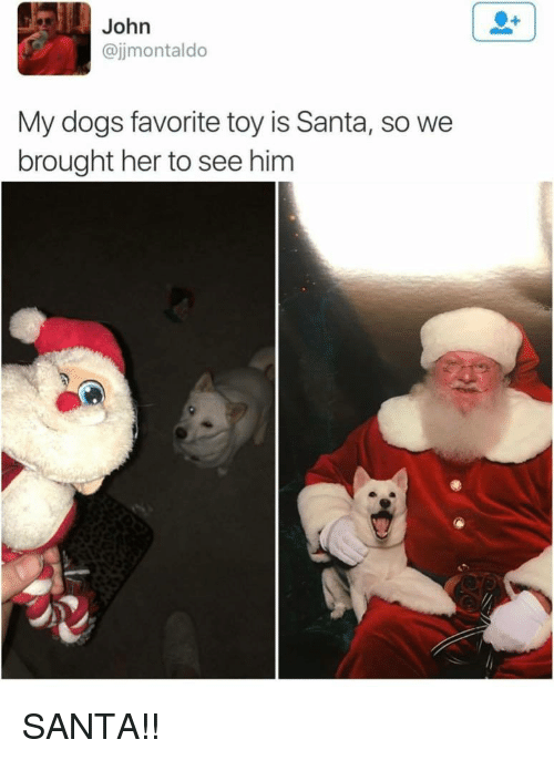 Dogs, Santa, and Her: John  @jjmontaldo  My dogs favorite toy is Santa, so we  brought her to see him SANTA!!