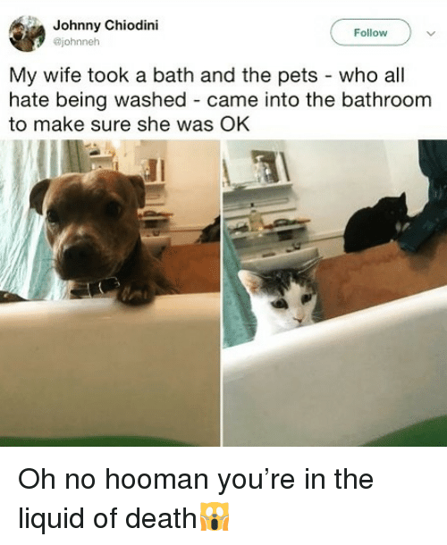 Funny, Pets, and Death: Johnny Chiodini  @johnneh  Follow  My wife took a bath and the pets - who all  hate being washed - came into the bathroom  to make sure she was OK Oh no hooman you're in the liquid of death🙀
