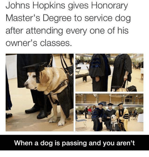 Memes, Masters, and 🤖: Johns Hopkins gives Honorary  Master's Degree to service dog  after attending every one of his  owner's classes.  When a dog is passing and you aren't